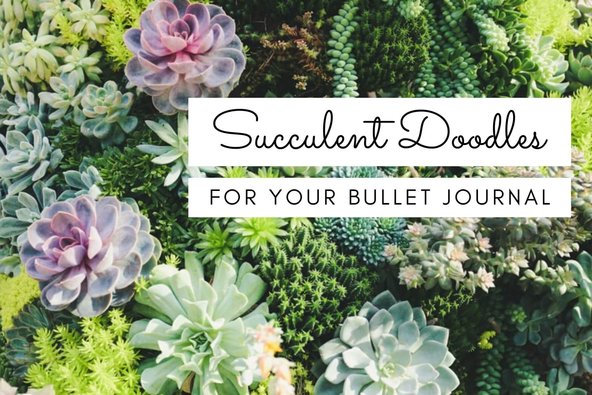 bullet journal succulent doodles, how to draw succulents, succulent doodles