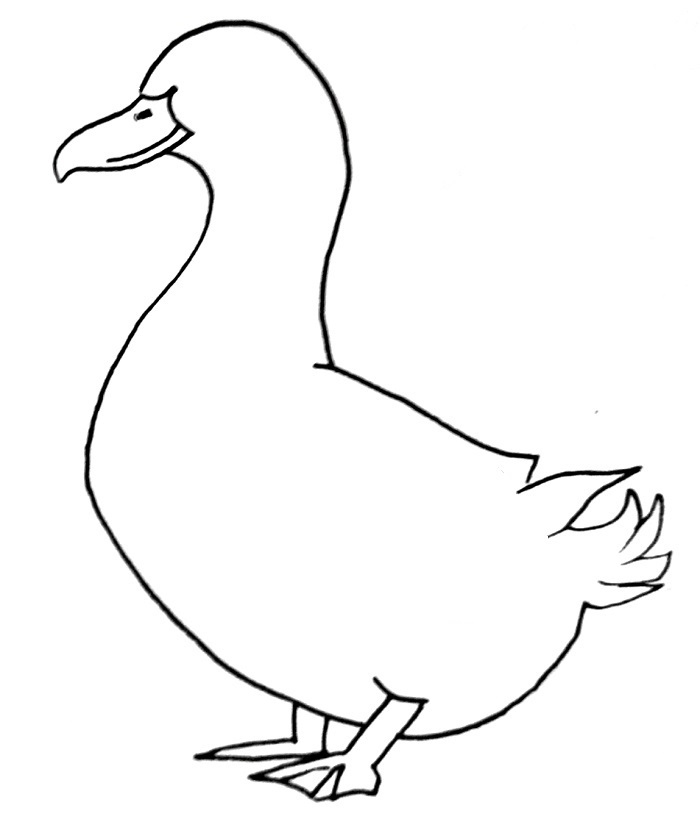 How to draw a duck step 8