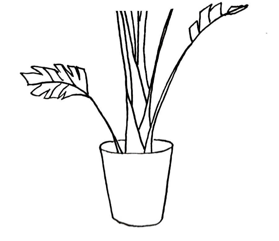 how to draw a pot plant step 6