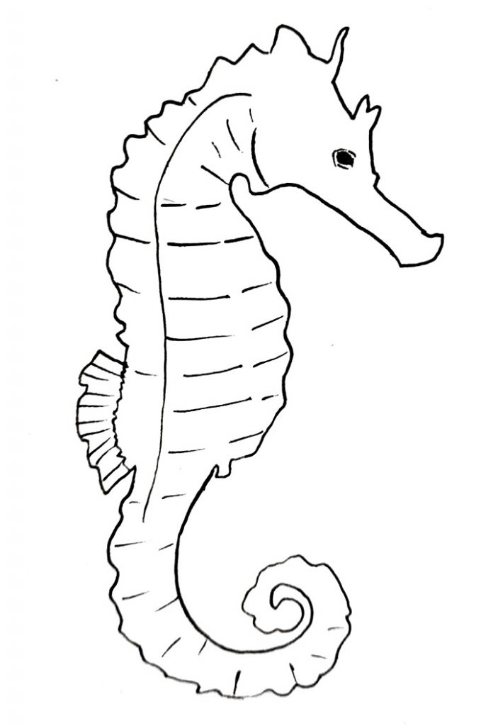 how to draw a seahorse step 10