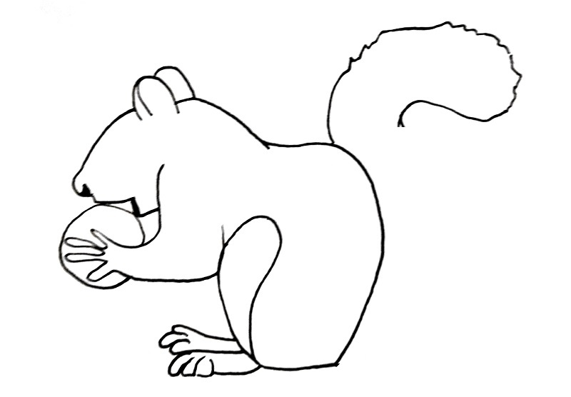 how to draw a squirrel step 10