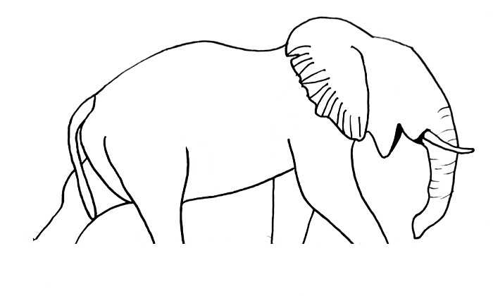 elephant drawing step 10