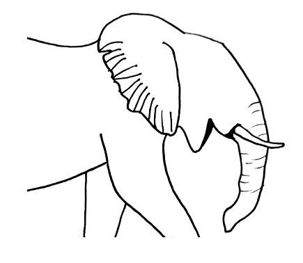 elephant drawing step 6