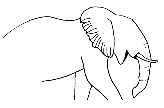elephant drawing step 7
