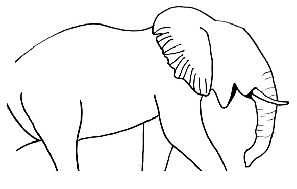 elephant drawing step 8