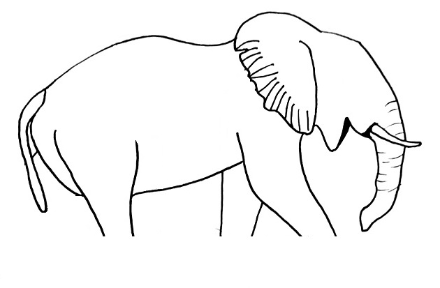 elephant drawing step 9