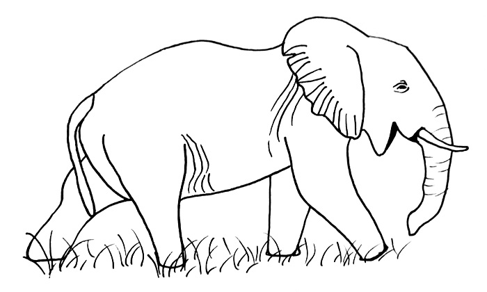 elephant drawing step 11