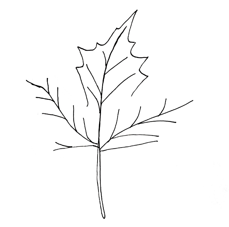 how to draw a maple leaf step 4