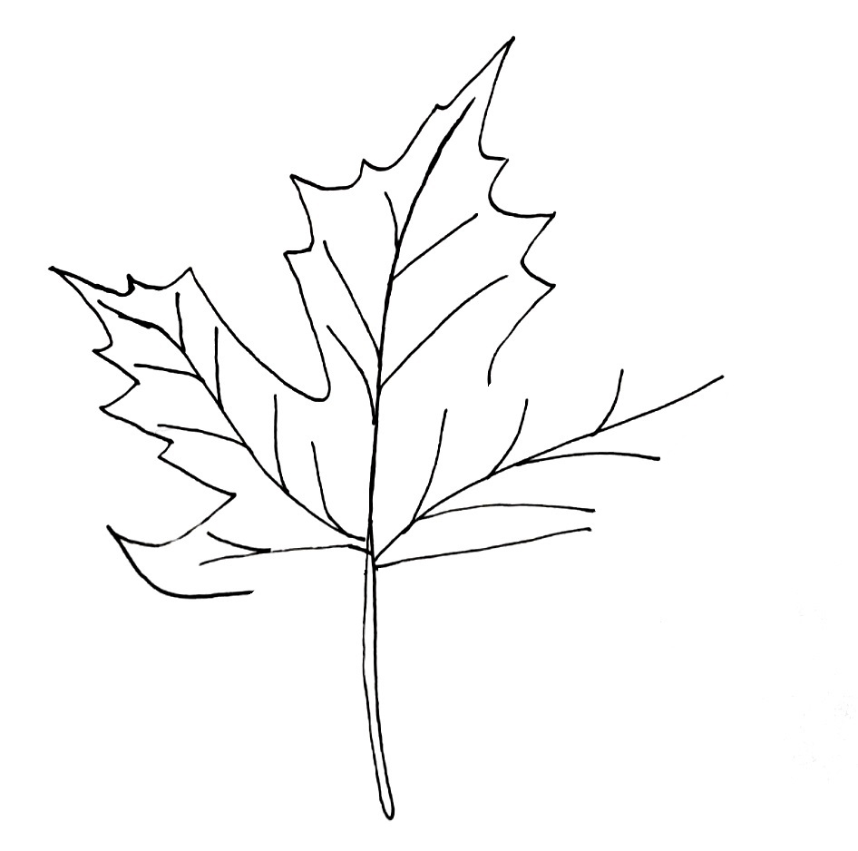 how to draw a maple leaf step 5