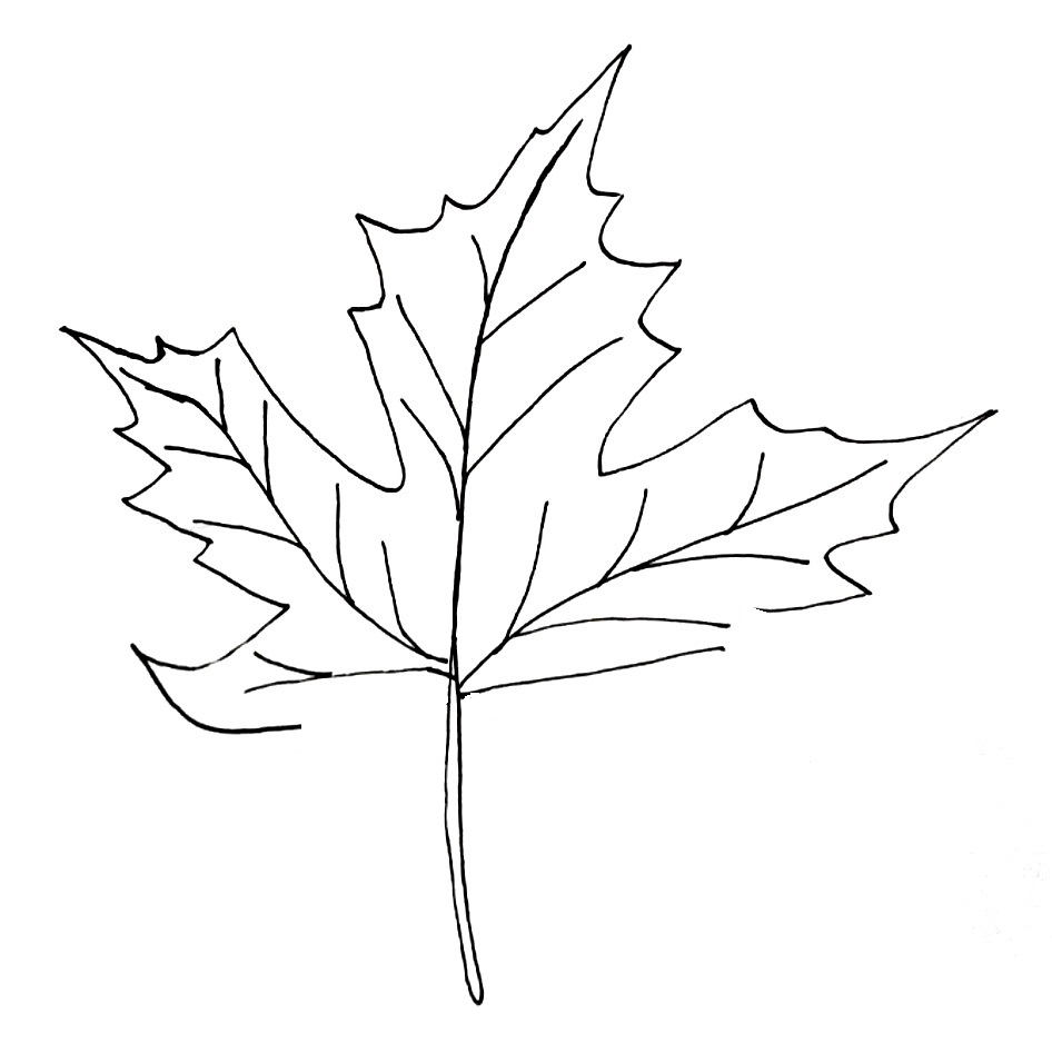 how to draw a maple leaf step 6