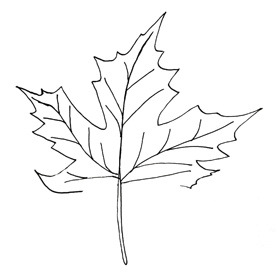 how to draw a maple leaf step 7