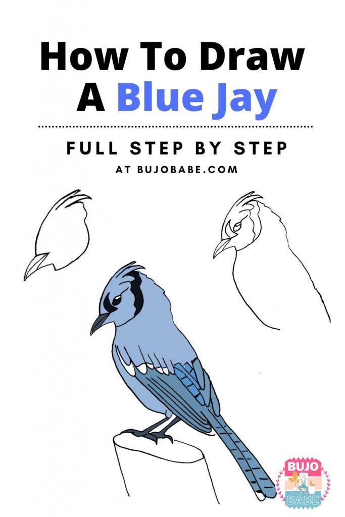 blue jay drawing tutorial