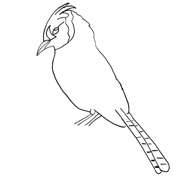 how to draw a blue jay bird step 9