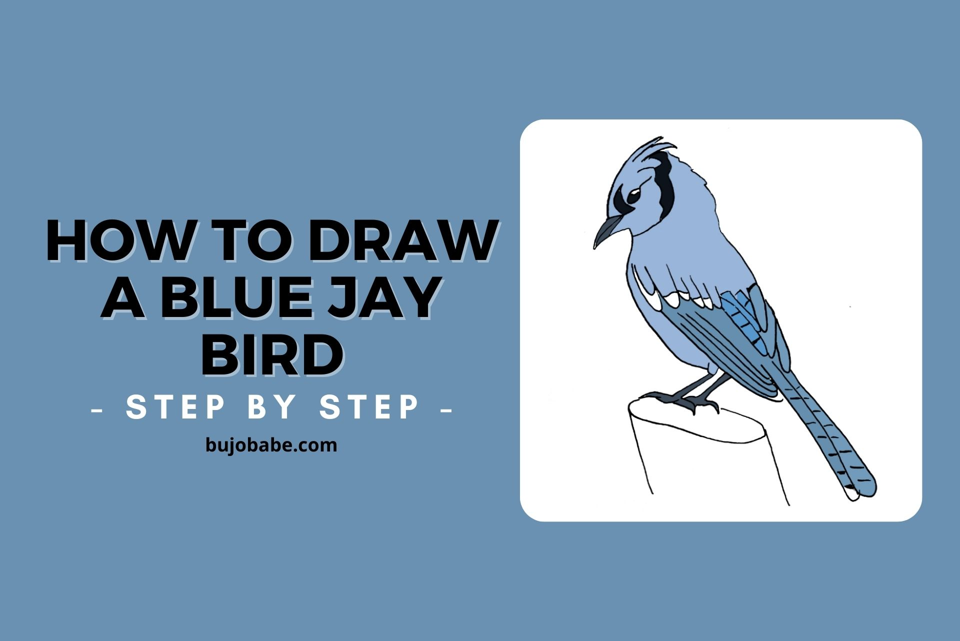 how to draw a blue jay bird step by step