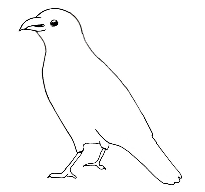 How to draw a crow step 6