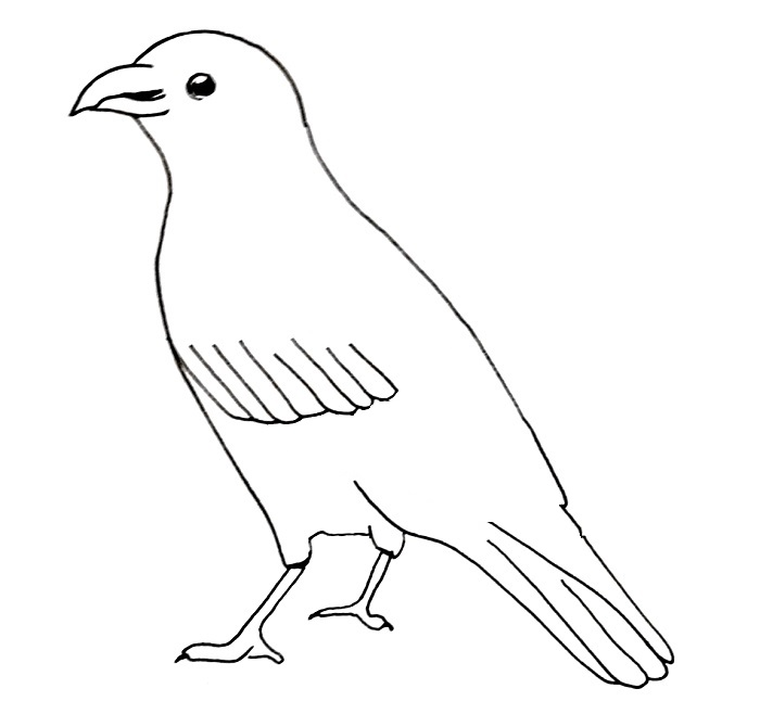 How to draw a crow step 7