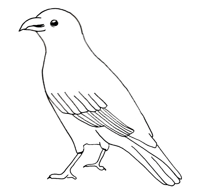How to draw a crow step 8