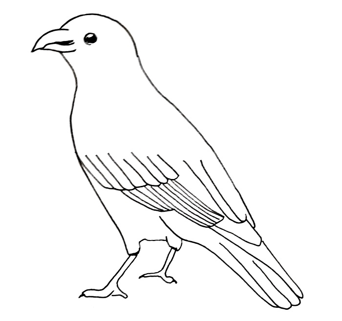 How to draw a crow step 9