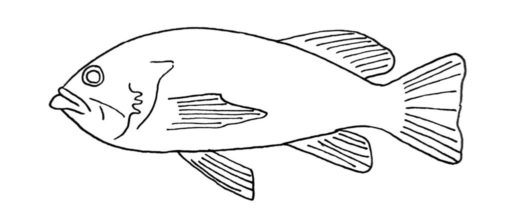 how to draw a fish step 10