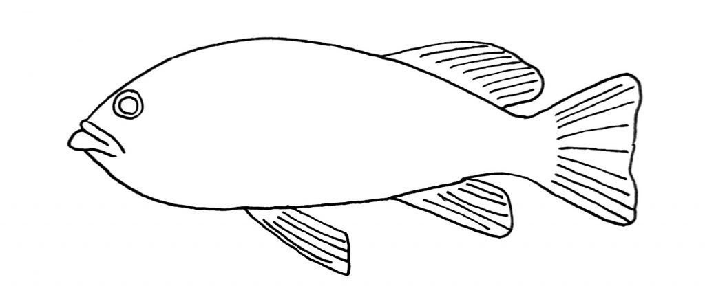 how to draw a fish step 8