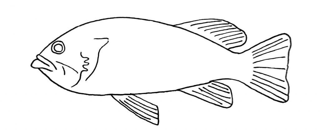 how to draw a fish step 9