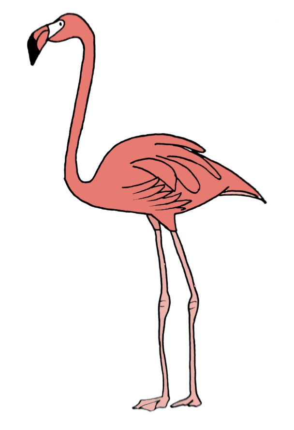 how to draw a flamingo step 12