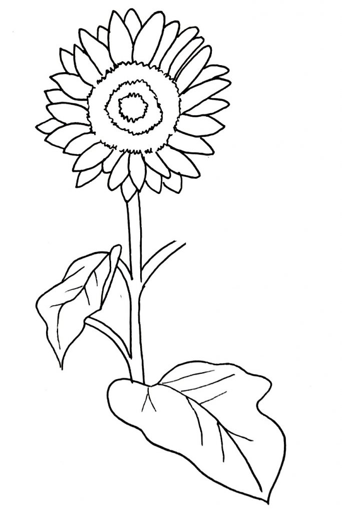 How To Draw A Sunflower Step 10