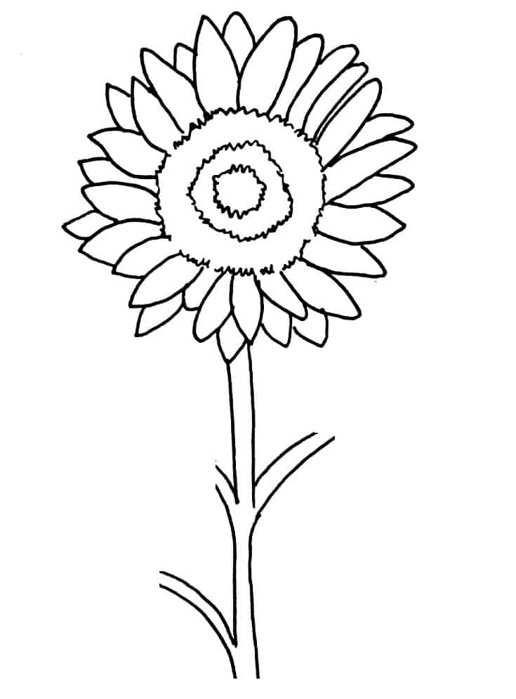 How To Draw A Sunflower Step 7