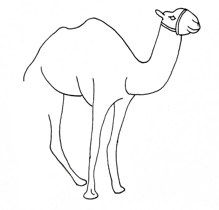 How To Draw A Camel Step 10
