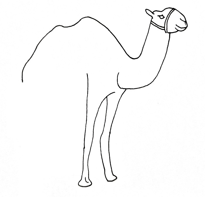How To Draw A Camel Step 8