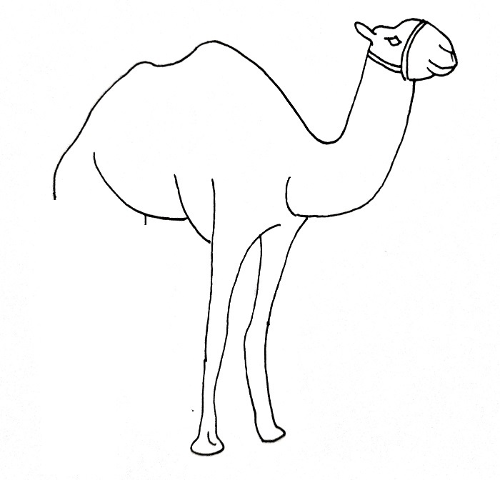 How To Draw A Camel Step 9