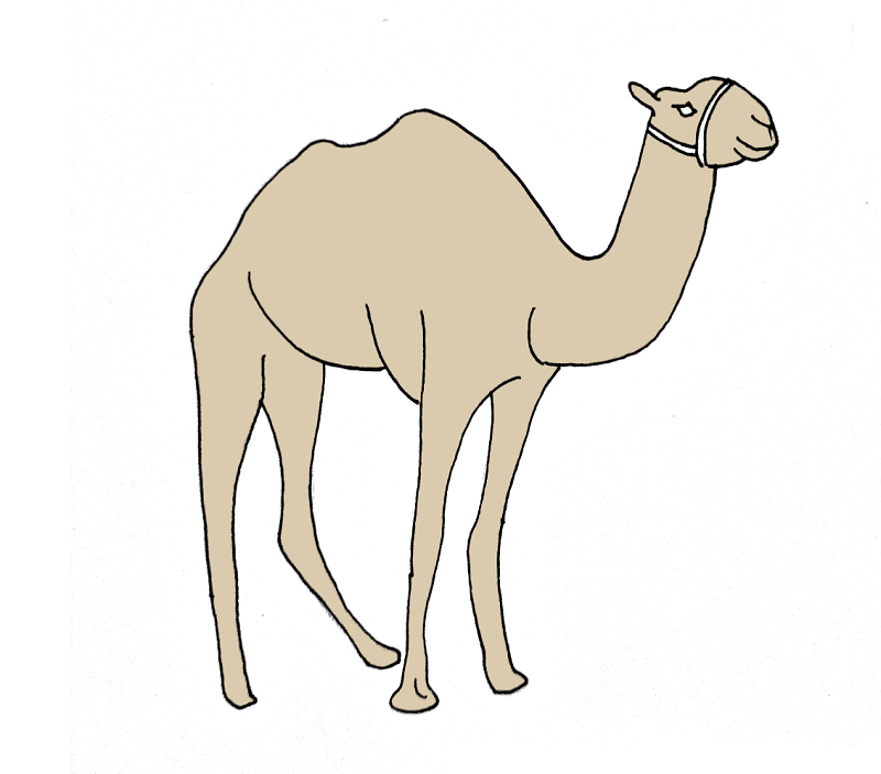 How To Draw A Camel Step 12