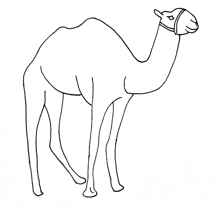 How To Draw A Camel Step 11