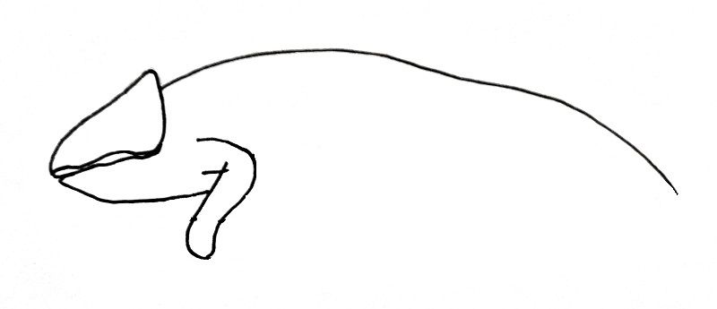 how to draw a lizzard step 3