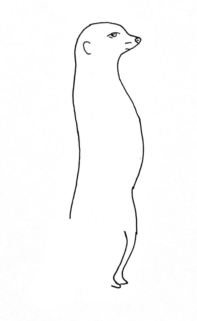 How to draw a meerkat step 4