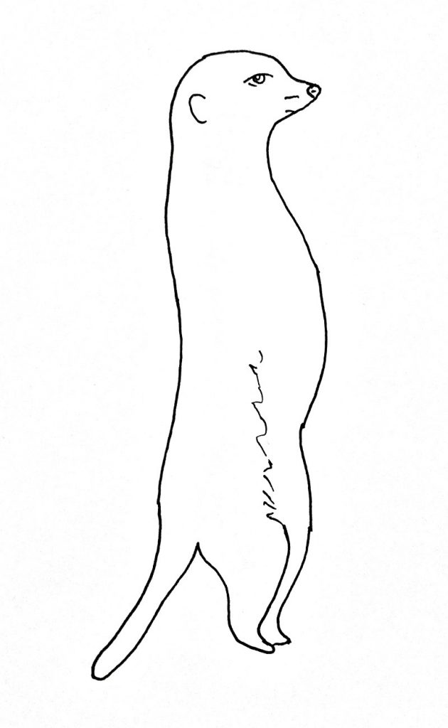 How to draw a meerkat step 7