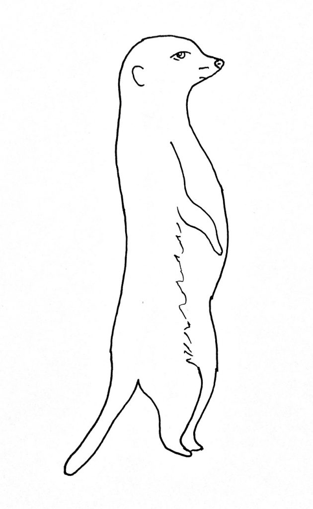 How to draw a meerkat step 8