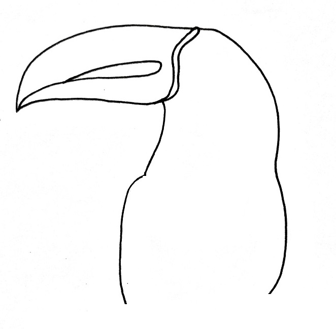 How to draw a toucan step 4