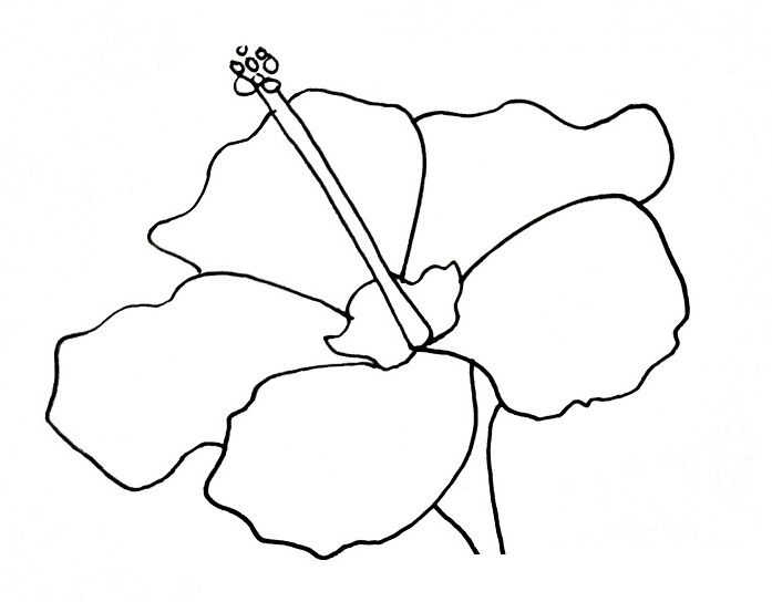 How To Draw A Hibiscus Step 7