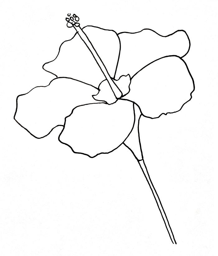 How To Draw A Hibiscus Step 8